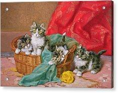 Mischievous Kittens Acrylic Print by Daniel Merlin