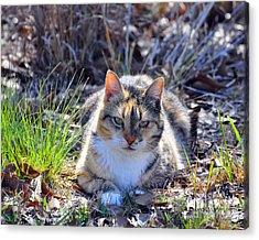 Miss Kitty Acrylic Print by Al Powell Photography USA