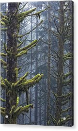 Misty Mystical Moss Forest Acrylic Print by Paul W Sharpe Aka Wizard of Wonders