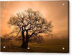 Misty Oak Acrylic Print by Kris Dutson