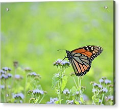 Monarch And Mist Acrylic Print by JD Grimes