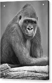 Monkey Acrylic Print by Darren Greenwood