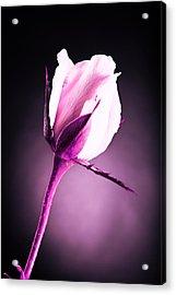 Monochrome Pink Rose Acrylic Print by M K  Miller