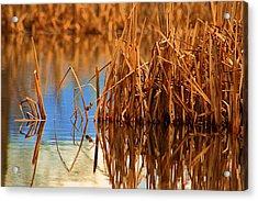 Montana Peace Pond Acrylic Print by William Kelvie