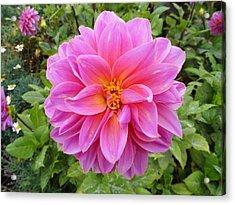Monterey Pink Acrylic Print by Robert Meyers-Lussier