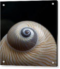 Moon Shell Acrylic Print by Carol Leigh