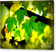 Morning  Light Acrylic Print by Perry Webster