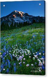 Morning Majesty Acrylic Print by Mike  Dawson