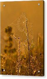Morning Web Acrylic Print by Joshua McCullough
