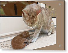 Mother And Kitten Acrylic Print by Augusta Stylianou