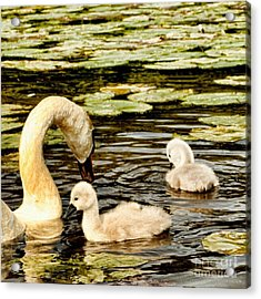 Mothers Love Acrylic Print by Isabella Abbie Shores