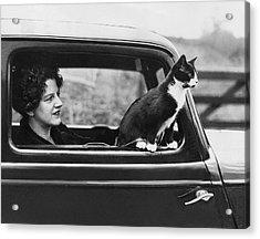 Motoring Cat Acrylic Print by Fox Photos