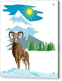 Mouflon Sheep Mountain Goat Acrylic Print by Aloysius Patrimonio