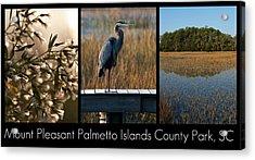 Mount Pleasant Palmetto Islands County Park  Acrylic Print by Melissa Wyatt