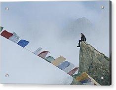 Mountain Climber Alex Lowe Sits Acrylic Print by Gordon Wiltsie