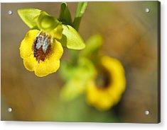 Mountain Orchids Acrylic Print by Guido Montanes Castillo