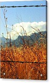 Mountain Wheat With Barbwire Acrylic Print by Jaye Crist