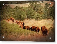 Moving On Acrylic Print by Tamyra Ayles