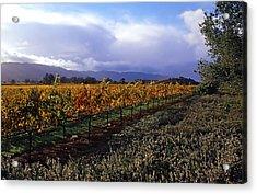 Mumm Napa Vineyard Acrylic Print by Richard Leon