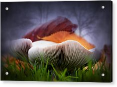 Mushrooms Close Up Acrylic Print by Svetlana Sewell