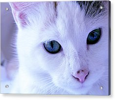 My Blue Cat Acrylic Print by Guadalupe Nicole Barrionuevo