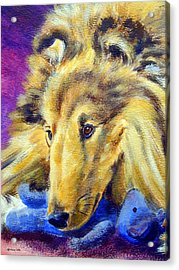 My Blue Teddy - Shetland Sheepdog Acrylic Print by Lyn Cook