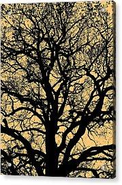 My Friend - The Tree ... Acrylic Print by Juergen Weiss