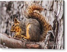 My Nut Acrylic Print by Robert Bales
