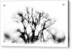 Mysterious Trees Acrylic Print by David Ridley