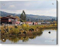 Napa River In Napa California Wine Country Acrylic Print by Wingsdomain Art and Photography