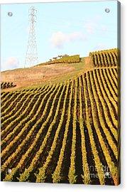 Napa Valley Vineyard . 7d9065 Acrylic Print by Wingsdomain Art and Photography