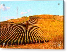 Napa Valley Vineyard Acrylic Print by Wingsdomain Art and Photography