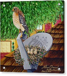 Nature Channel- Red Shouldered Hawk Acrylic Print by Katherine Young-Beck