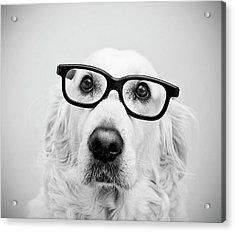Nerd Dog Acrylic Print by Thomas Hole
