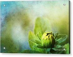 New Beginnings Acrylic Print by Darren Fisher