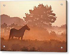 New Forest Pony In Mist At Dawn. Acrylic Print by Julie Mitchell/Southdowns Photographics