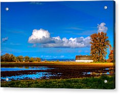 Nisqually Wildlife Refuge P35 Acrylic Print by David Patterson