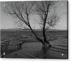 No Tree Is An Island Acrylic Print by Jeff Moose