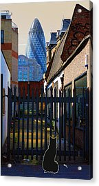 Not The Top Cat Acrylic Print by Jasna Buncic