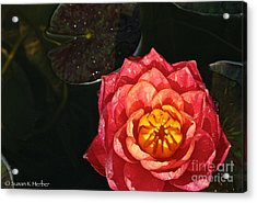 Nymphaea Acrylic Print by Susan Herber
