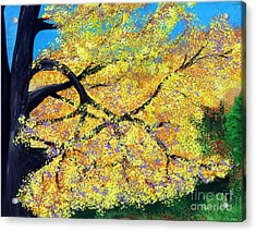 October Fall Foliage Acrylic Print by Alys Caviness-Gober