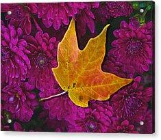 October Hues Acrylic Print by Paul Wear