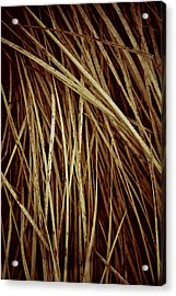 Of Needles And Haystacks Acrylic Print by Odd Jeppesen