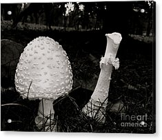 Off With Your Head Acrylic Print by Trish Hale