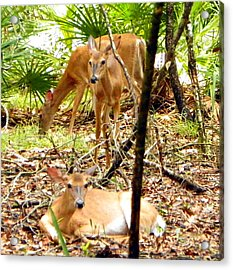 Oh Deer Three Acrylic Print by Sheri McLeroy