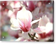 Oh Magnolia Acrylic Print by Jenna Mackay