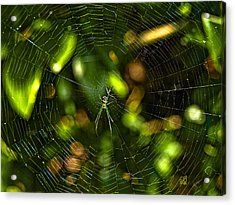 Oh The Web We Weave Acrylic Print by Barbara Middleton