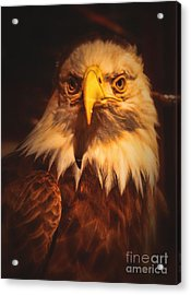 Old Abe Profile Acrylic Print by Tommy Anderson