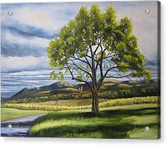 Old Apple Tree Acrylic Print by Linda L Doucette