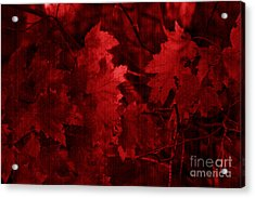 Old Red Acrylic Print by Marjorie Imbeau